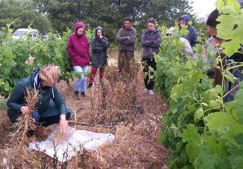 Programme d'actions agroenvironnementales : captage de l'Aumède - Le Pouget