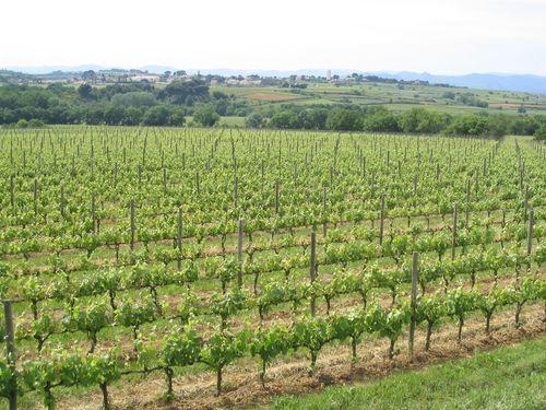 L'agroforesterie viticole : pourquoi ? comment ?